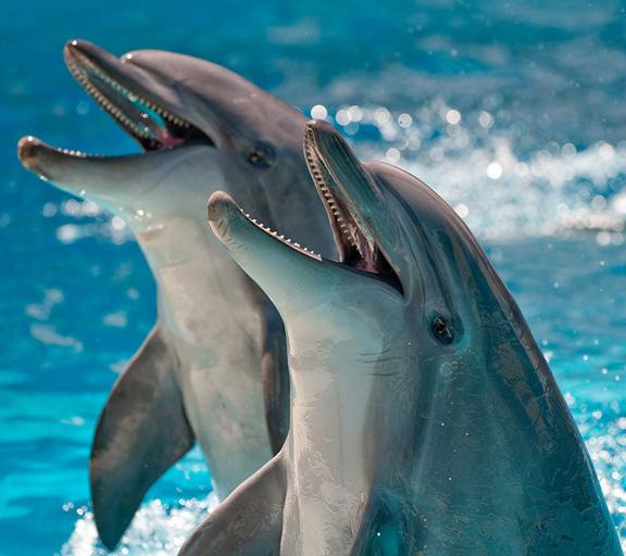 Suoni e il canto delle delfini