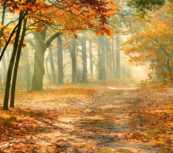 Suoni della foresta d'autunno