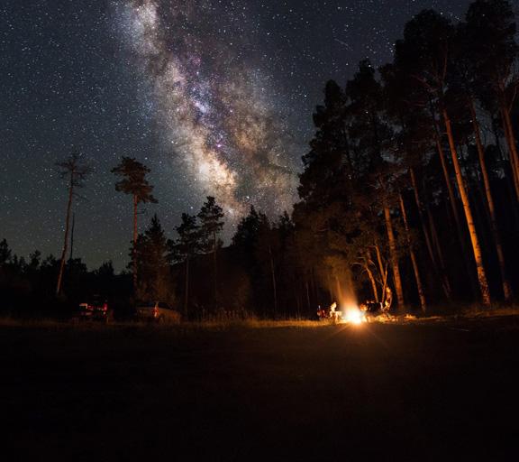 Suoni della foresta notturna