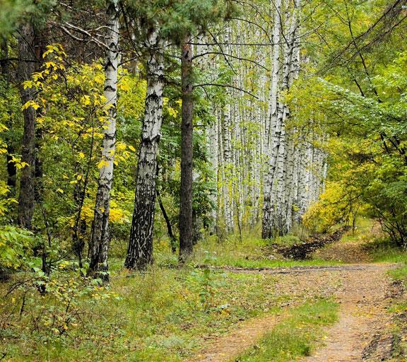 Suoni del bosco diurno
